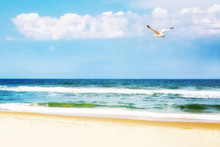 Peaceful Beach With Seagull Soaring