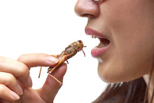 Asian Female Eating Fried Locu...