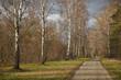 Wald Birke Weg