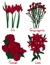Set. Four Kinds Of Red Flowers With Names On A White Background Eps 10 Illustration