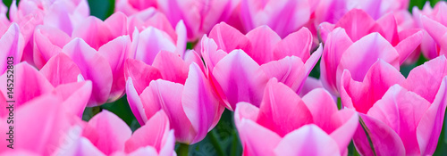 Fotografie, Obraz  Vibrant colorful  holiday or birthday background with beautiful closeup pink tul