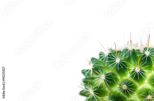Poster Cactus Mammillaria Cactus isolated on white background