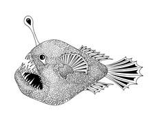 Anglerfish Black On White Illu...