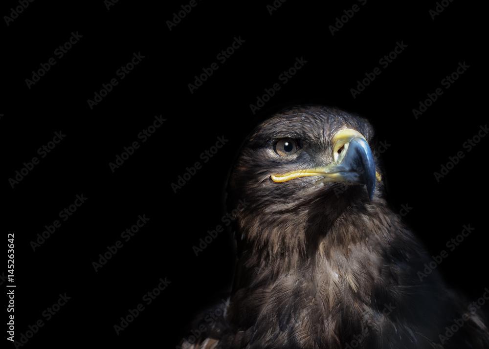 Fotografie, Obraz Eagle on black