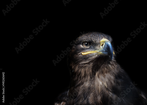 Canvas Print Eagle on black