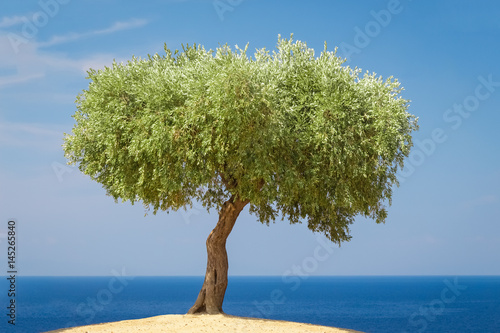 Foto op Plexiglas Olijfboom Olive tree against blue ocean and sky background