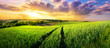 Leinwandbild Motiv Vast green field at gorgeous sunset, a colorful panoramic landscape