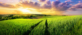 Fototapeta Fototapety z naturą - Vast green field at gorgeous sunset, a colorful panoramic landscape