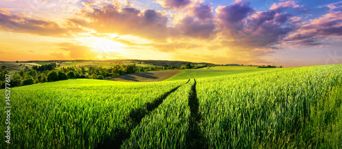 Obraz Vast green field at gorgeous sunset, a colorful panoramic landscape - fototapety do salonu