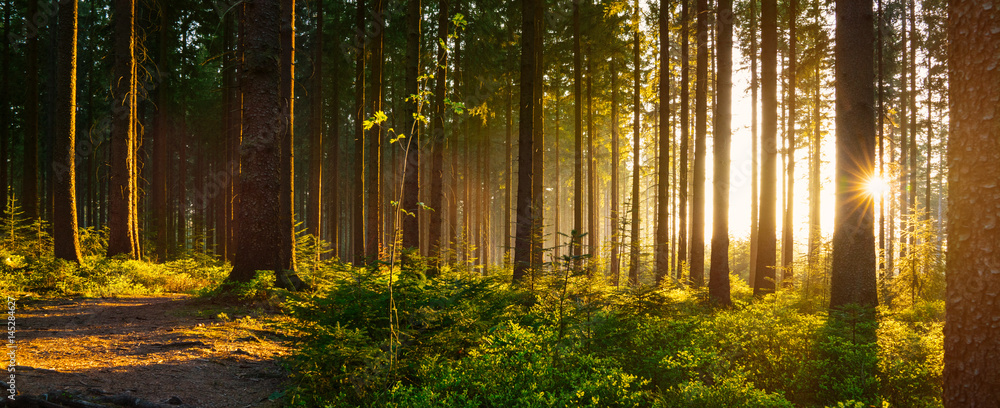 Fototapety, obrazy: Silent Forest in spring with beautiful bright sun rays