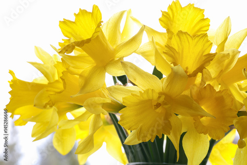 Bouquet of daffodils on the windowsill