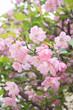 埼玉県越谷市 春の花 草木 庭園