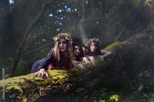 Fototapeta Czarownice w ciemnym lesie.