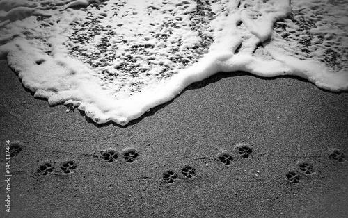 Photo Doggie paw prints