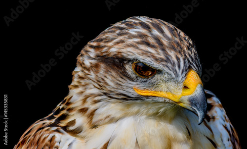 Valokuva  Fine art soft colored head-shot portrait of a single isolated hawk with strong y