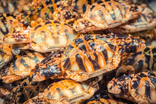 Row Of Crabs In The Asian Wet ...