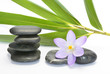 Empty white background with cairn zen stones, bamboo and purple crocus flower