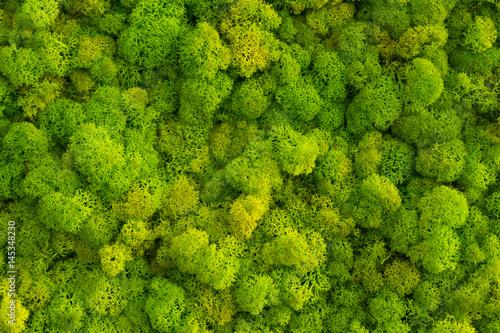 tlo-mech-z-porostow-reniferow-cladonia-rangiferina-omszaly-tekstura-wiosna-zielony