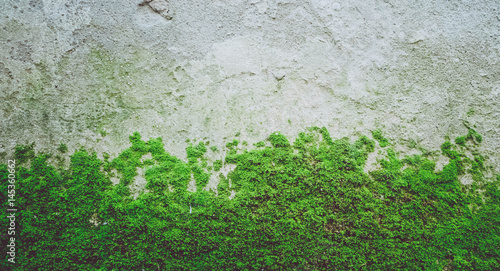 Fotografie, Obraz  Photo depicting a bright green moss on an old stone wall
