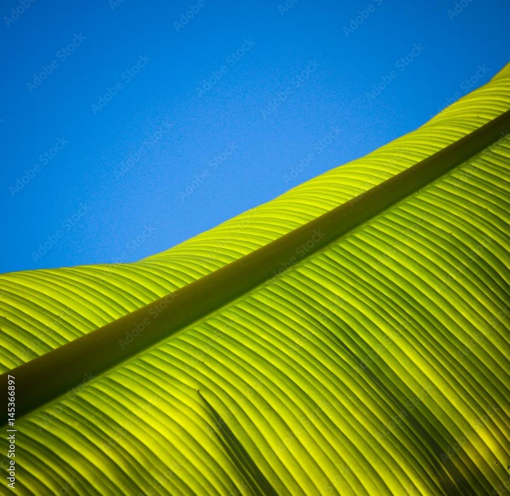 Valokuva  palmier 2