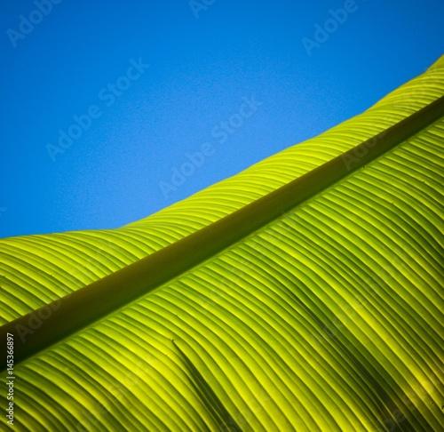 palmier 2 Fototapet