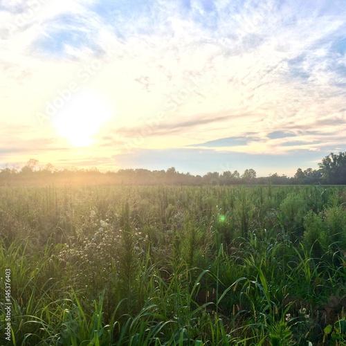 Foto op Plexiglas Weide, Moeras Sunset