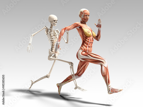 Female Muscle Anatomy And Skeleton Running 3d Illustration Buy