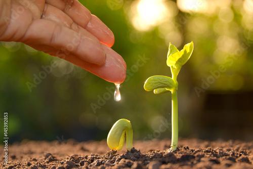 Fotobehang Planten Growing plants. Plant seedling. Hand nurturing and watering young plants growing.