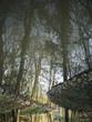 Spiegelung eines Baches mit Bäumen