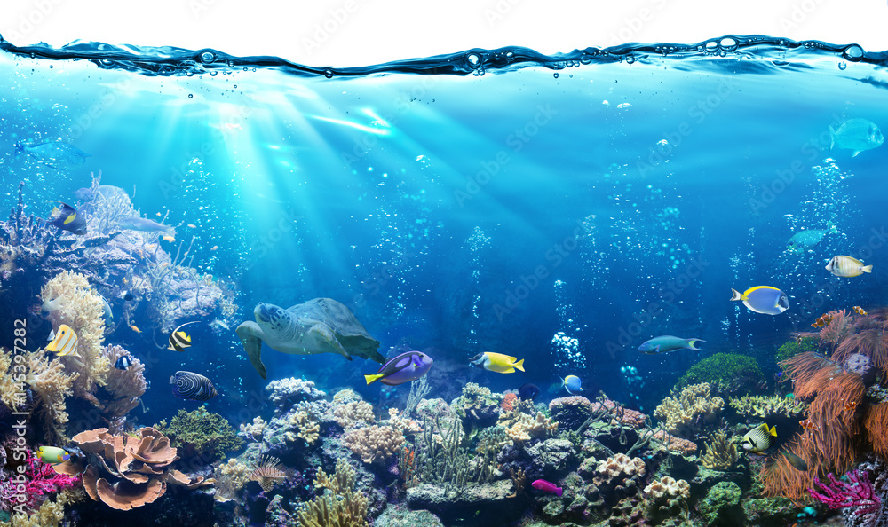Fototapeta Underwater Scene With Reef And Tropical Fish