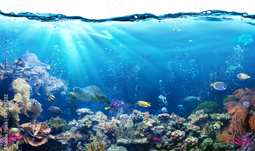 Poster Bleu Underwater Scene With Reef And Tropical Fish