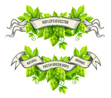 Fresh Hop Plants, Green Leaves, Outline Hand-drawn Ribbons.