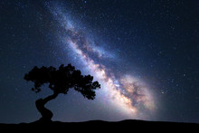 Milky Way With Alone Old Tree ...