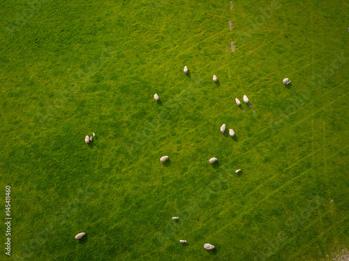 Deurstickers Groene Herd Of Sheep in green field Aerial