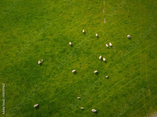 Foto op Plexiglas Groene Herd Of Sheep in green field Aerial