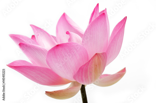 Poster Lotus flower lotus flower isolated on white background.