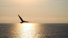 Silhouette Bird Over The Sea At Sunset