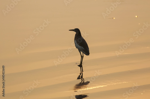 Photo  A bird is walking on the beach