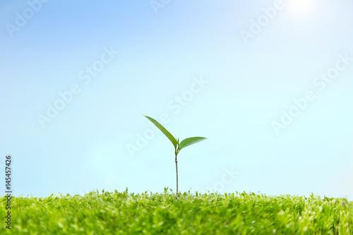 фотография  苔に生える双葉の成長と環境イメージ