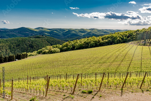 Fotografiet  Panorama of green chianti hills in tuscany italy in spring, land of red wine and