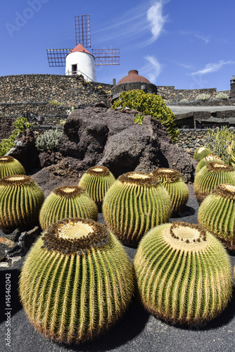 Deurstickers Canarische Eilanden Cactus Garden in Lanzarote, Jardin de Cactus, popular tourist attraction, Lanzarote, Canary Islands, Spain, Europe