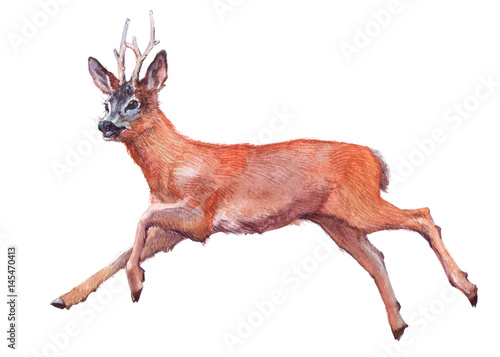 Watercolor single deer animal isolated on a white background illustration.