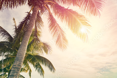 Tuinposter Palm boom Tropical beach with palm trees and sunny sky