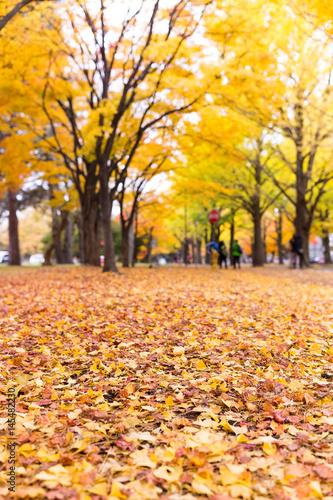 Foto op Canvas Herfst Autumn scene