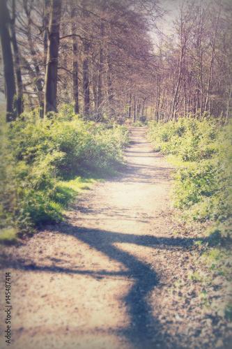 Foto op Canvas Weg in bos Low sun through trees in the woods
