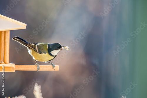 Fotomural  Kohlmeise am Vogelhäuschen