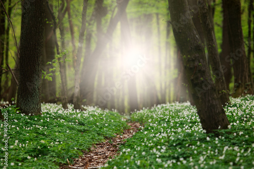 Photo Stands Road in forest Path in middle of flower carpet in green forest in dawn sunshine