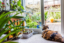 One Calico Cat Lying Down By P...