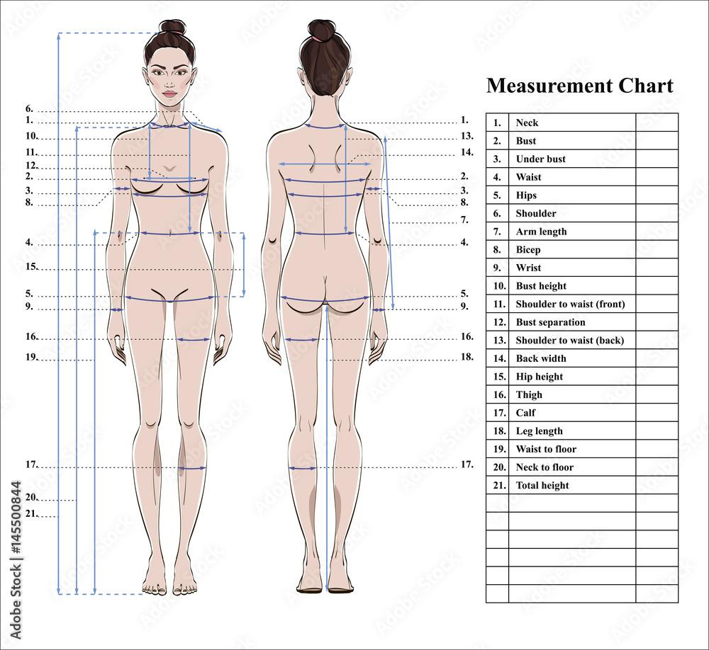 Photo & Art Print Woman body measurement chart | EuroPosters