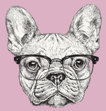 Hipster Geek French Bulldog Vector Illustration